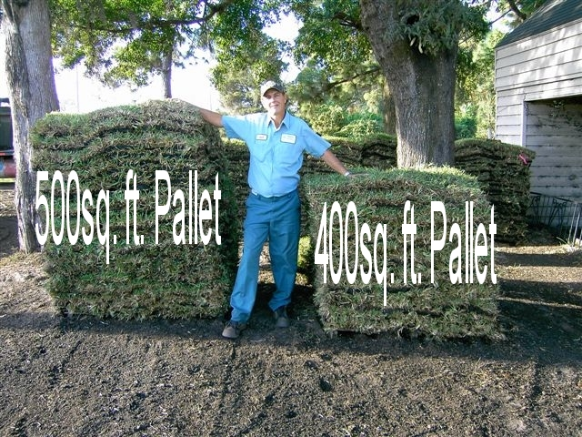 P R Sod Pallet Lawns Replaced Floratam Or Bahia
